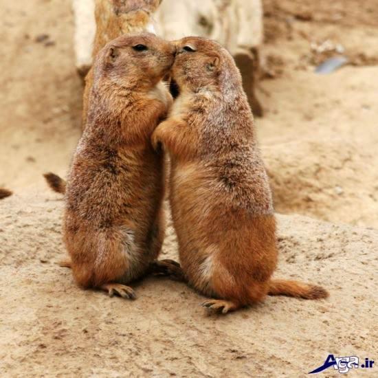 عکس حیوانات دوست داشتنی
