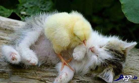 عکس حیوانات با نمک و خنده دار