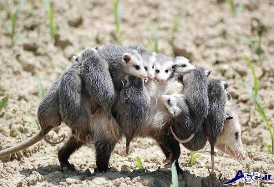 عکس جذاب و دیدنی از حیوانات