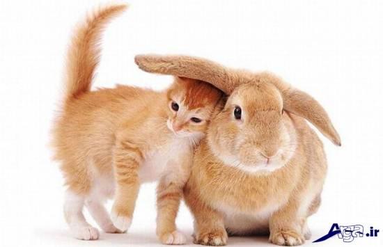 عکس های گربه و خرگوش