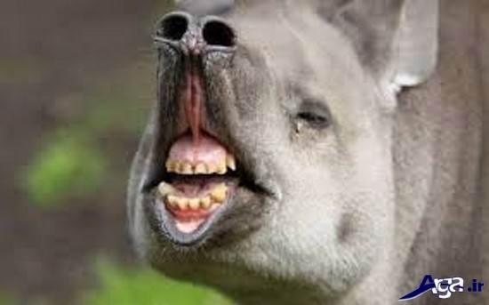 عکس خنده دار از حیوانات