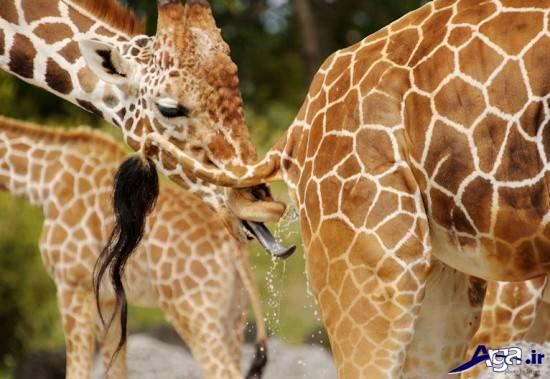 عکس حیوانات بامزه با سوژه های جذاب و ژست های مختلف