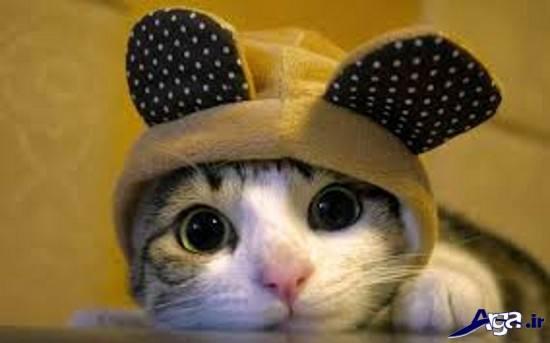 عکس حیوانات خنده دار