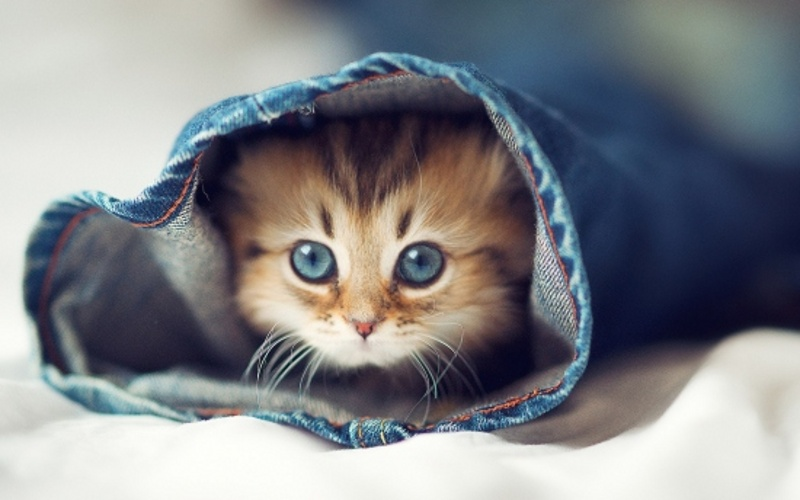 عکس های حیوانات بانمک با ژست های مختلف