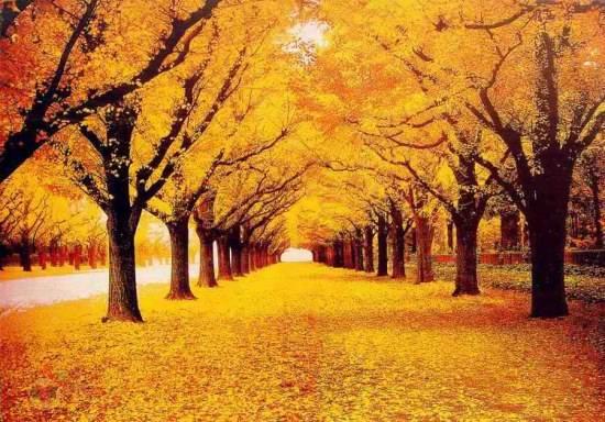 عکس منظره پاییزی برای پروفایل