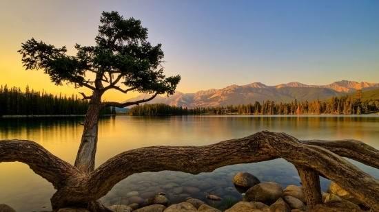 عکس زیبا از طبیعت برای پروفایل