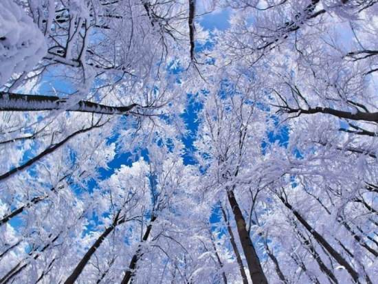عکس منظره زمستانی