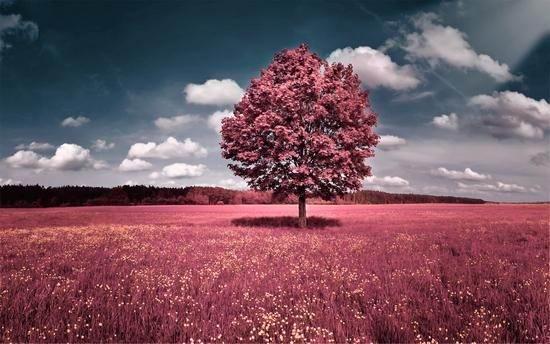 عکس طبیعت به رنگ های بنفش و صورتی