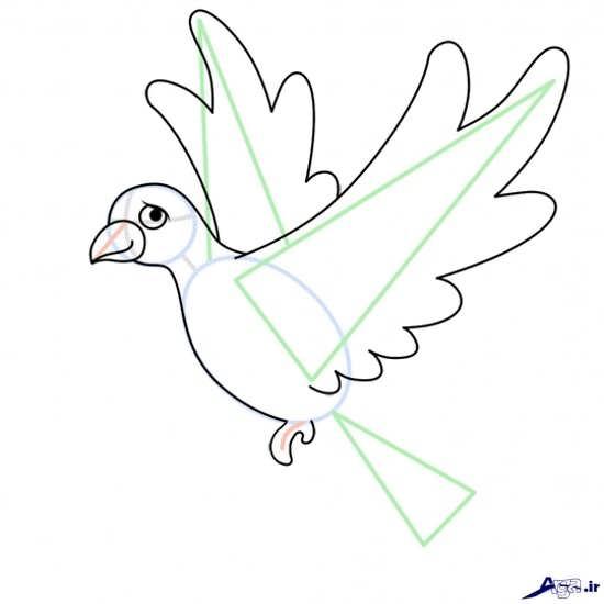 آموزش نقاشی کبوتر