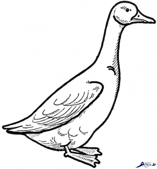 مدل نقاشی مرغابی