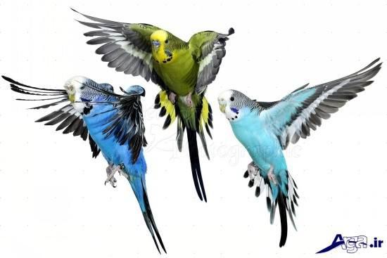 Lovebird (14)