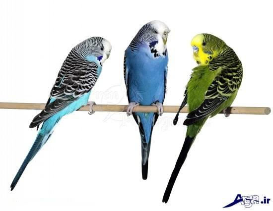 Lovebird (15)