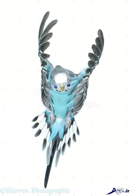 Lovebird (16)