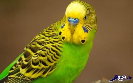 عکس های زیبا از پرنده ها