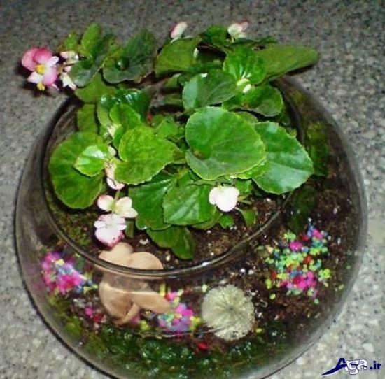 ساخت تراریوم باغ شیشه ای