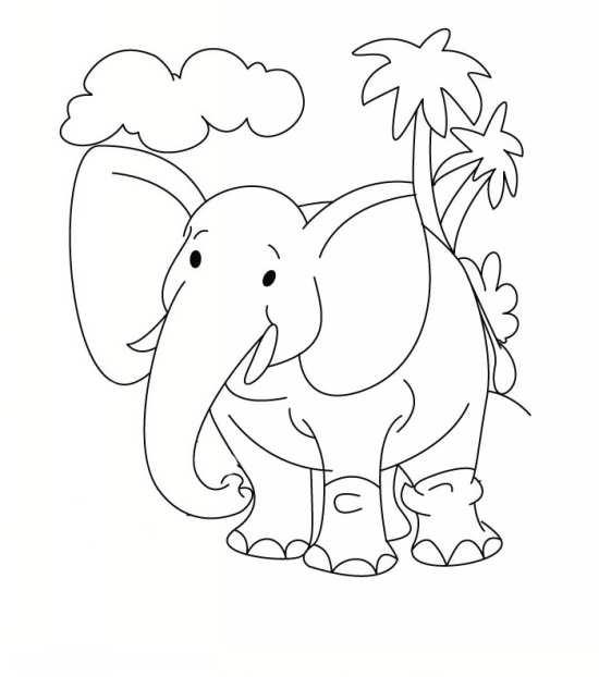 نقاشی های زیبا فیل در مکان های مختلف