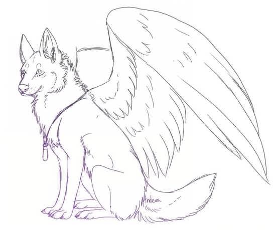 نقاشی گرگ زیبا و جذاب