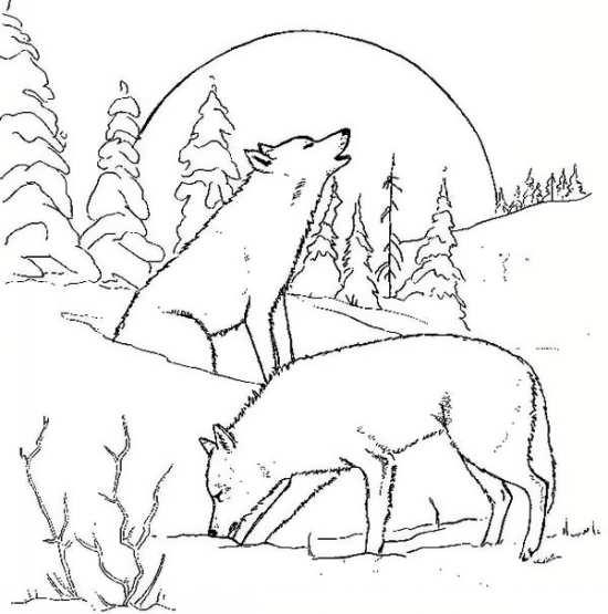 نقاشی های گرگ های وحشی در جنگل