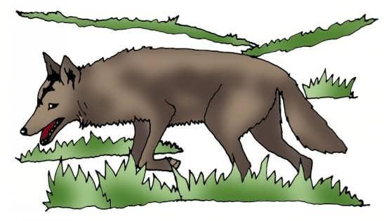 نمونه رنگ آمیزی شده نقاشی گرگ