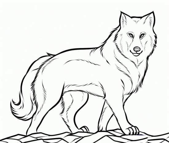 نقاشی زیبا از گرگ ناقلا