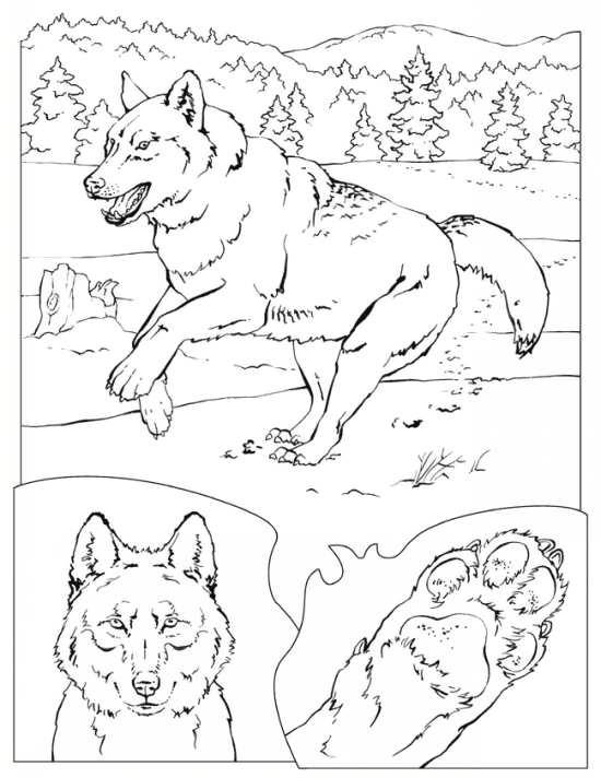 نقاشی های گرگ در مکان های مختلف