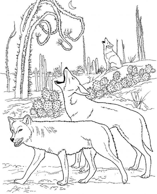 نقاشی های گرگ در جنگل