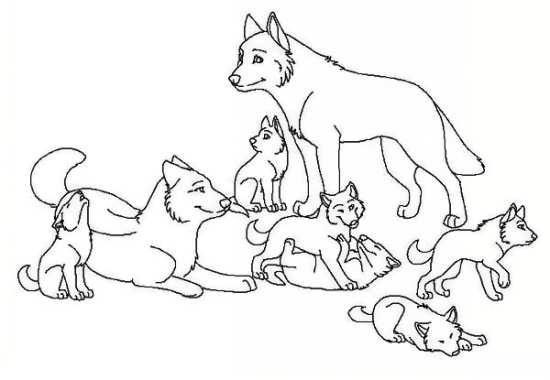 نقاشی زیبا از گرگ و بچه هایش