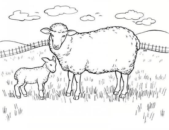 نقاشی های زیبا از گوسفندان در مکان های مختلف