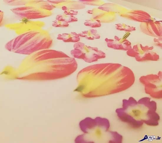 تزیین قاب گوشی با گل خشک