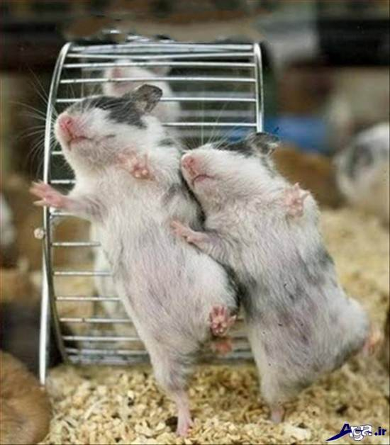 عکس های با نمک و خنده دار حیوانات