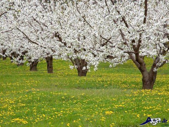 عکس فصل بهار
