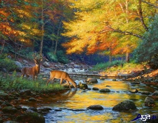عکس زیبای رودخانه