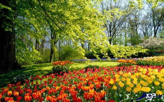 تصویر زیبا و آرامش بخش
