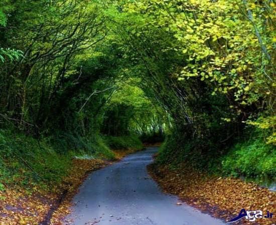 عکس زیبای جاده سرسبز