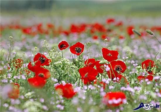 عکس زیبای گل ها