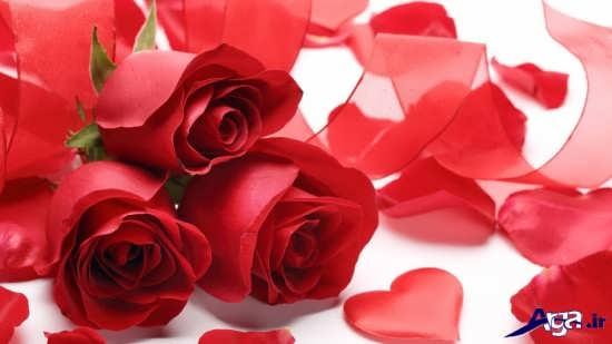 عکس گل های زیبای عاشقانه