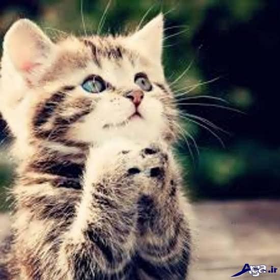 عکس گربه های زیبا