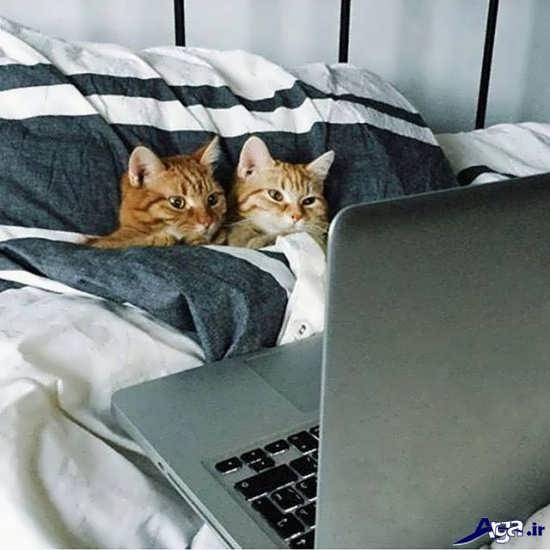 عکس گربه های زیبا وملوس