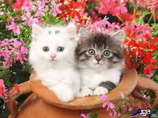 عکس گربه های زیبا وبسیار جذاب