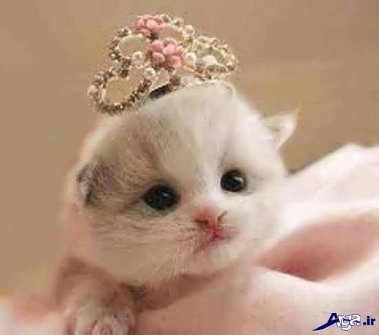 عکس گربه های زیبا و جذاب