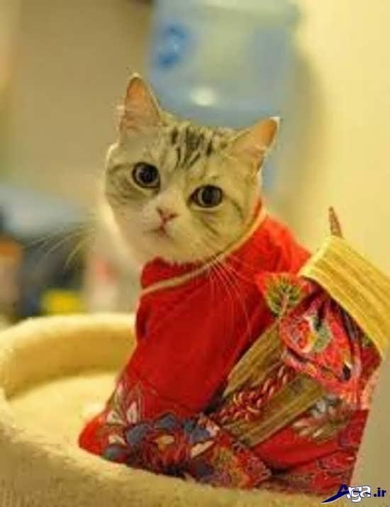 عکس گربه های زیبا و رنگارنگ