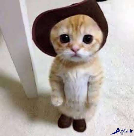 عکس گربه های زیبا و ملوس