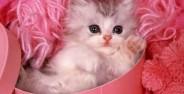 عکس گربه های زیبا وبسیار دوست داشتنی جذاب