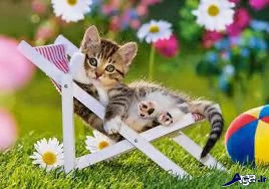 عکس گربه های زیبا و ناز