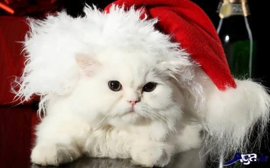 عکس گربه های زیبا و بامزه