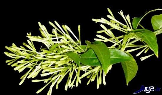 عکس هنری گل ها