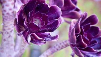 تصاویر زیباترین گلهای دنیا