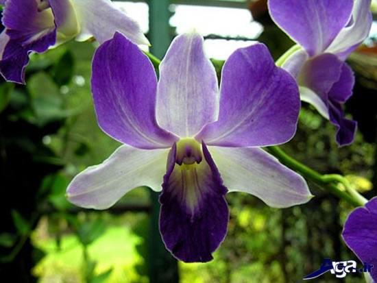تصاویری از زیباترین گل های دنیا