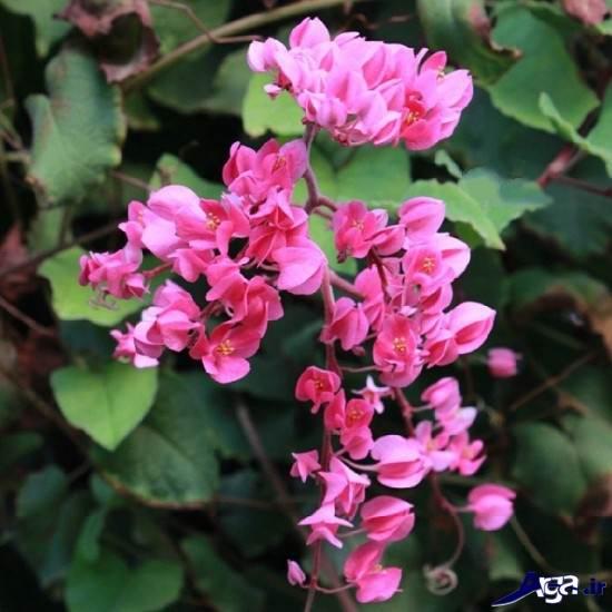 تصاویر گلهای زیبا و جذاب