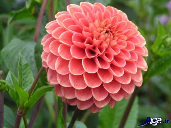 عکس های زیبایی از گل های خاص